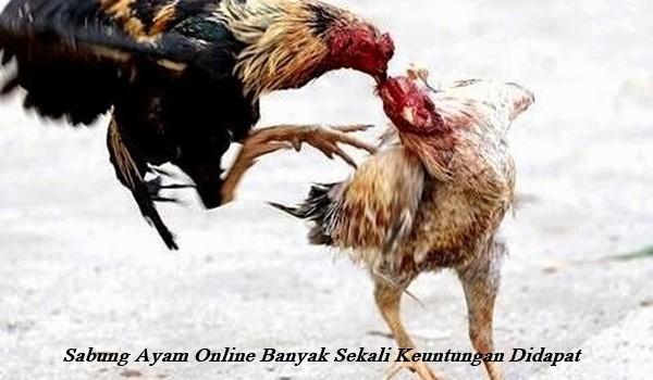 Sabung Ayam Online Banyak Sekali Keuntungan Didapat
